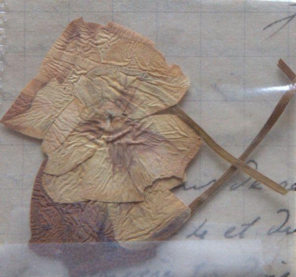 en tête de la lettre du 8 août 1915