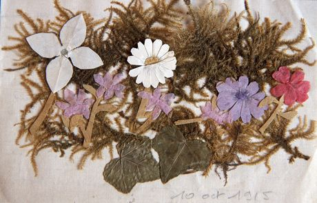 Fleurs séchées jointes au courrier de Simon Collay